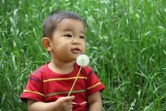 日本男孩吹的蒲公英种子 库存照片