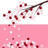 日本的一个柔和的佐仓分支标志 免版税库存照片