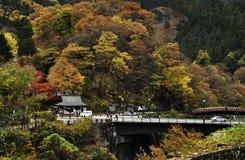 日本的秋叶 库存照片