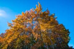 日本的秋天风景 库存图片