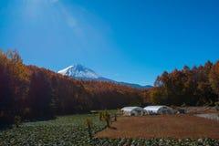 日本的秋天风景 库存照片