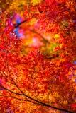 日本的秋天风景 免版税库存照片