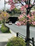 日本的自然秀丽路 免版税库存照片