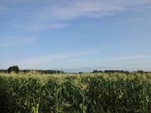 日本的, Tokachi玉米农场 免版税库存图片