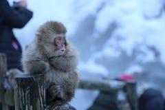 日本短尾猿在长野 免版税图库摄影