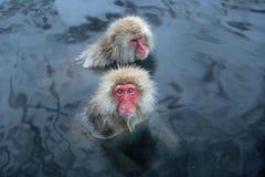 日本短尾猿在长野 图库摄影