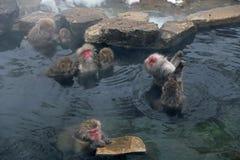日本短尾猿在长野 免版税库存图片