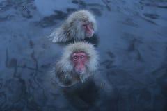日本短尾猿在Onsen 库存图片