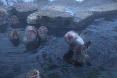日本短尾猿在Onsen 免版税库存照片