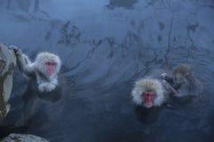 日本短尾猿在Onsen 库存照片