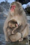 日本短尾猿 免版税库存图片
