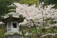 日本石Piller &樱花 图库摄影