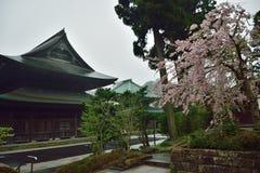 日本禅宗寺庙&樱花 免版税库存照片