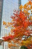 日本秋天颜色 免版税图库摄影