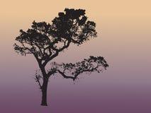 日本结构树 图库摄影