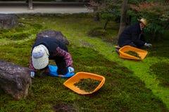 日本花匠在Kenninji寺庙庭院里工作 免版税图库摄影
