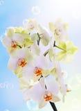 日本花Orchid.Beauty植物群 库存图片