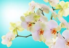 日本花Orchid.Beauty植物群 库存照片