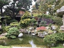 日本茶园 免版税图库摄影