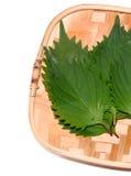 日本草本,牛排植物;紫苏frutescens crispa 免版税库存图片