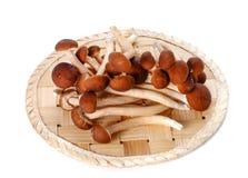 日本蘑菇,在白色背景的竹地板 免版税库存图片