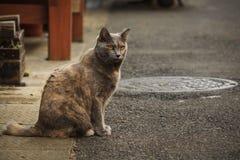 日本街道猫 库存照片