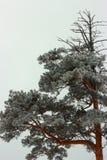 日本质河西伯利亚晴朗的汤姆 图库摄影
