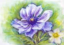 日本银莲花属花。 免版税图库摄影