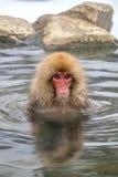 日本雪猴子短尾猿在温泉Onsen Jigokudan公园, 图库摄影