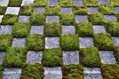 日本青苔庭院 免版税库存照片