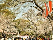 日本,东京3月29,2019开花的樱桃树有花的佐仓在春天 佐仓开花fullbloom在室外公园与 免版税库存图片