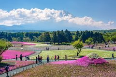日本- 5月19,2017 :游人享受shibazakura节日视域 免版税库存图片