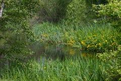 日本质晴朗池塘的夏天 库存照片