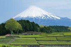 日本绿茶种植园和富士山 免版税图库摄影