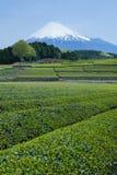日本绿茶种植园和富士山 库存照片
