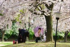 日本` s樱花季节 免版税图库摄影