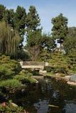 日本koi池塘 库存图片