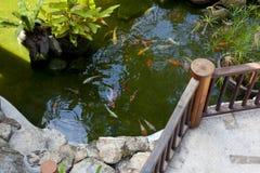 日本koi鲤鱼 库存照片
