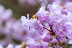 日森林春天郊区结构 免版税库存照片