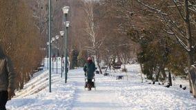 日横向公园晴朗的冬天 人步行在冬天公园 股票视频