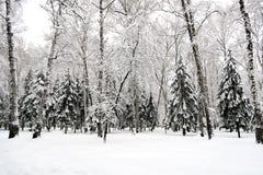 日横向公园晴朗的冬天 库存照片