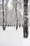 日横向公园晴朗的冬天 免版税库存图片