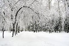 日横向公园晴朗的冬天 图库摄影