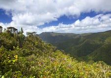 日横向毛里求斯山本质晴朗的木头 木头和山 库存图片
