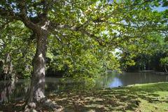 日横向毛里求斯山本质晴朗的木头 湖和热带树 免版税图库摄影