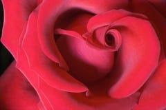 日玫瑰色s华伦泰 库存图片