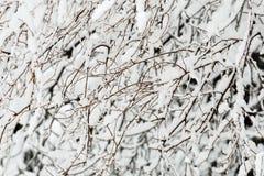 日理想的冬天 库存照片