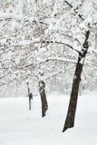 日理想的冬天 免版税库存照片