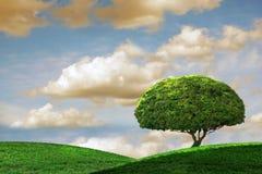 日田园诗一个夏天结构树 免版税图库摄影