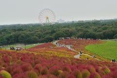 日立海滨公园,日本 免版税图库摄影